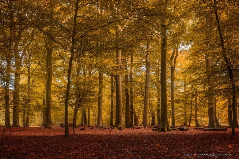 Betoverende herfst kleuren