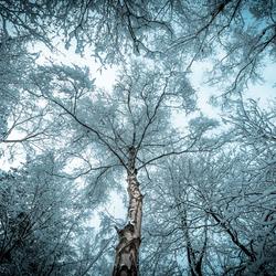Late sneeuw