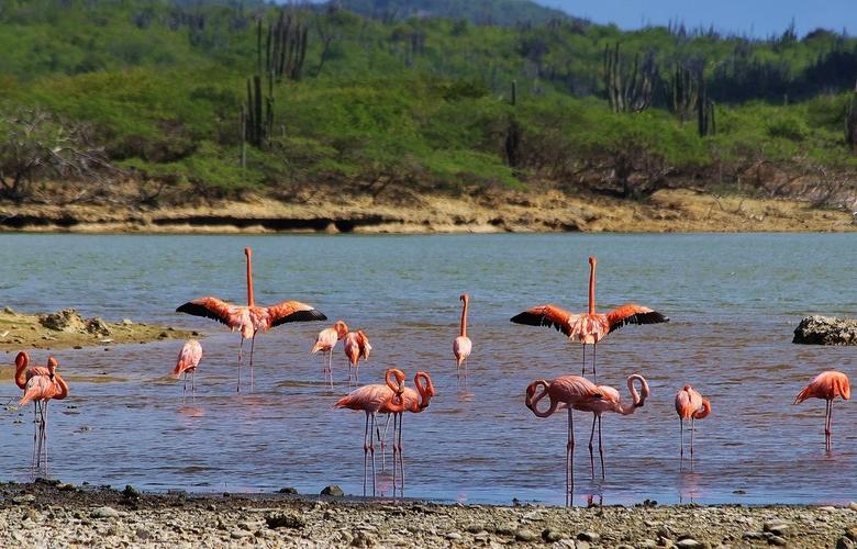 Klaar voor vertek - Flamingo`s bij Lagun