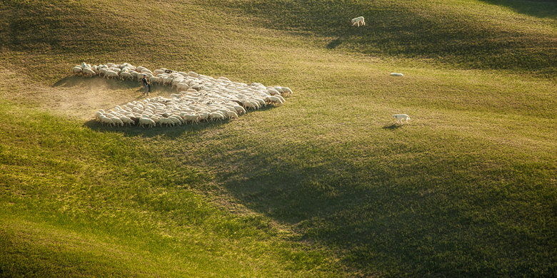 Herder met kudde en honden......(Toscane)