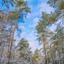 sneeuw in de zon