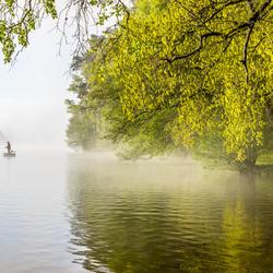 Visser in de mist