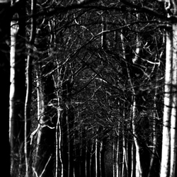The strange woods