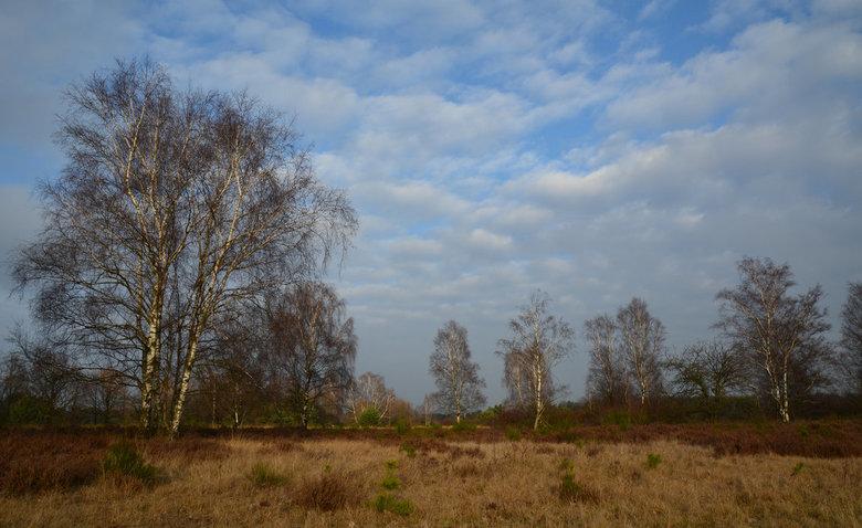 De heide in winterslaap! - De Grote Heide in Venlo op een rustige winterdag. In de 2e Wereldoorlog was dit gebied een van de grootste militaire vliegv