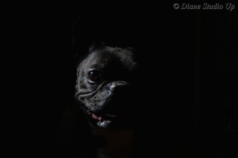 Velvet Bulldog