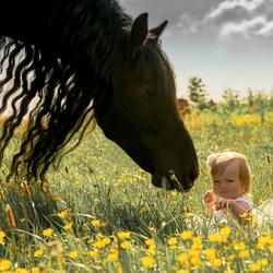 Fries paard Vlimmen en Mayra