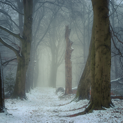 Winter op de Grebbeberg