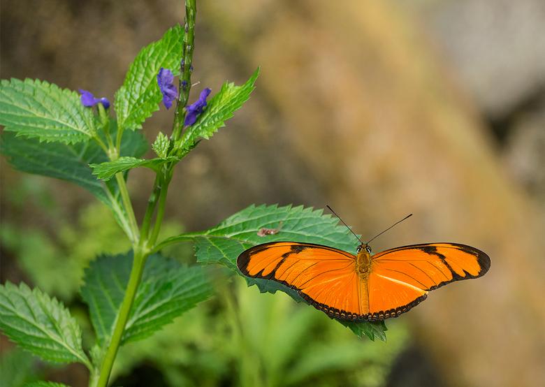 Wildlands colors - Nog maar een foto van mijn dagje in de vlindertuin van Wildlands, deze keer niet eens met een macrolens gemaakt maar met de kleine