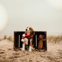 Bokeh kerst hond