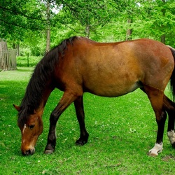 Paard (I)