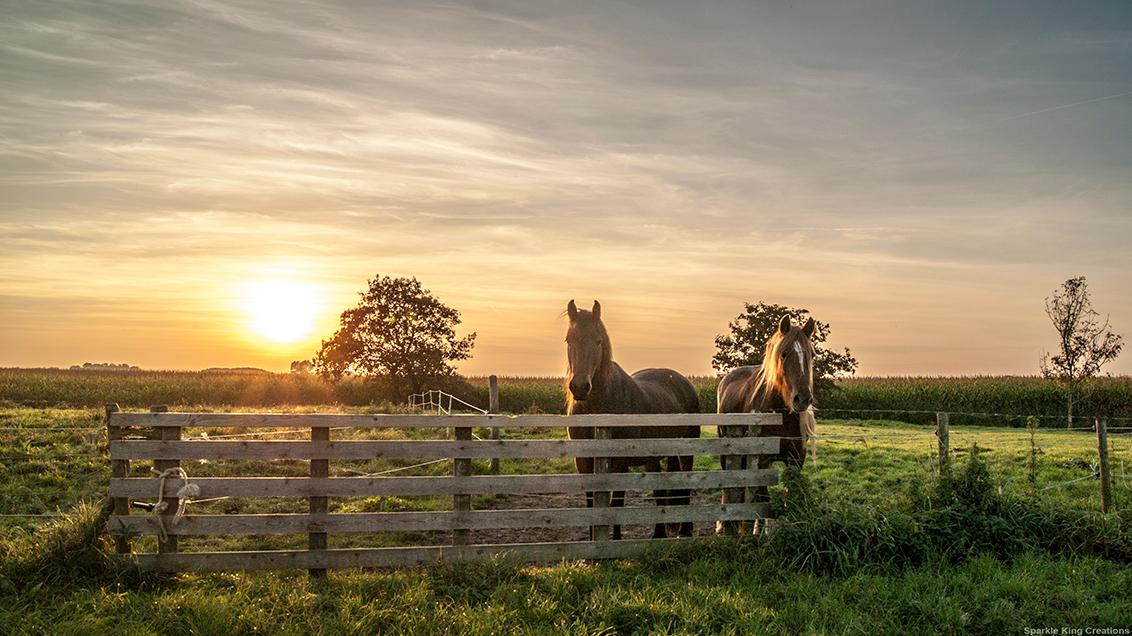 Horse power Sunset