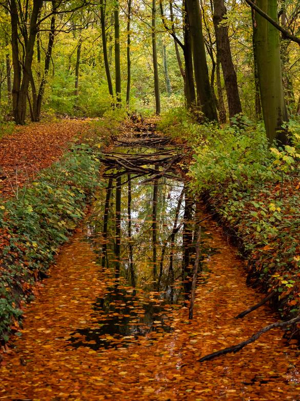 Herfst Oosterpark