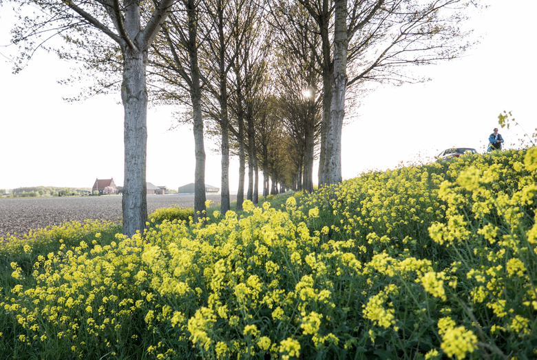 """Holland - Koolzaad - De lente is weer aangebroken, gelukkig kent de natuur geen lockdown en laat het al zijn glorie graag zien <img  src=""""/images/smil"""
