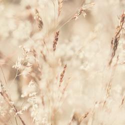 Gras - Onkruid
