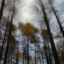 late herfst 3