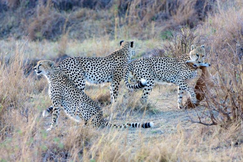 Cheeta's, The Three Brothers kill