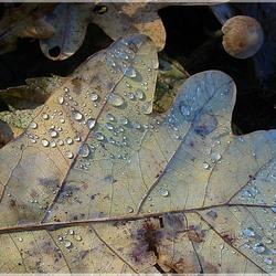 """Een """"pareltje"""" van de herfst....."""