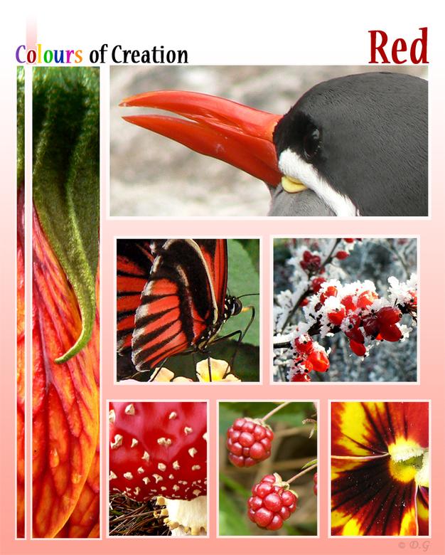 COC: Red - Dit is de tweede collage uit mijn 7-delige serie &#039;Colours of Creation&#039;<br /> <br /> Kleuren uit de natuur.<br /> <br /> Hiern