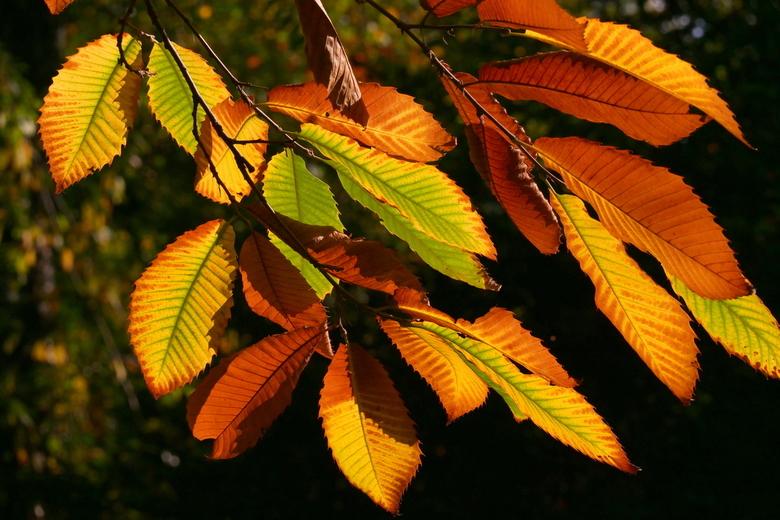 Herfst - Kleuren pracht