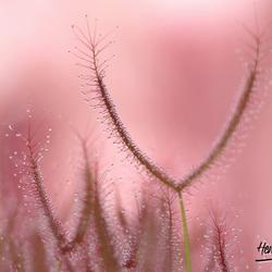 Hortus Botanicus -3-
