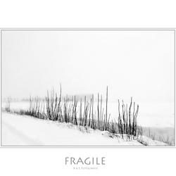 Fragile...
