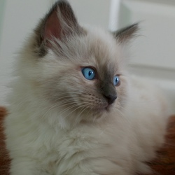 Blue eyes little Newman