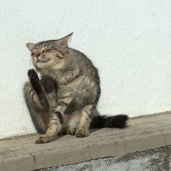 Miauw........