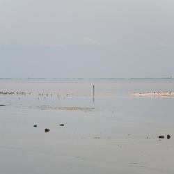 Waddenzee