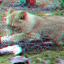 lion Blijdorp Zoo Rotterdam 3D