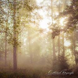 Mist en zon door de bomen