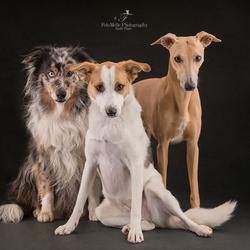 Hollands next dog model!