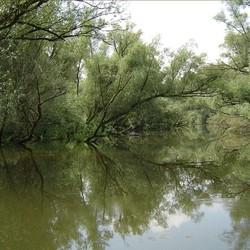 wildernis van de biesbosch