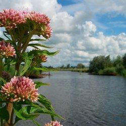 wilde bloemen van de Zaanstreek