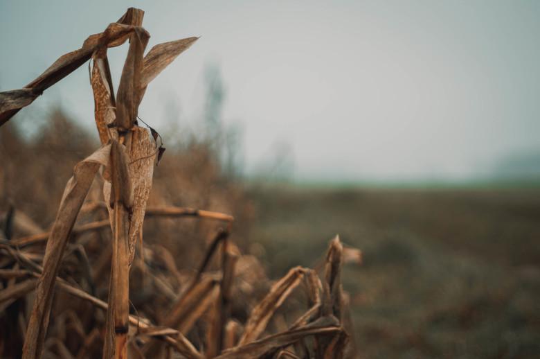 Boerenlandschap -