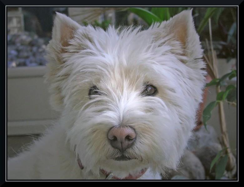 Lady - Dit is het hondje van mijn vrouw, Lady.<br /> Haar aanpreekpunt en motivator.