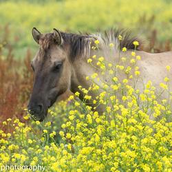 yellow oostvaardersplassen