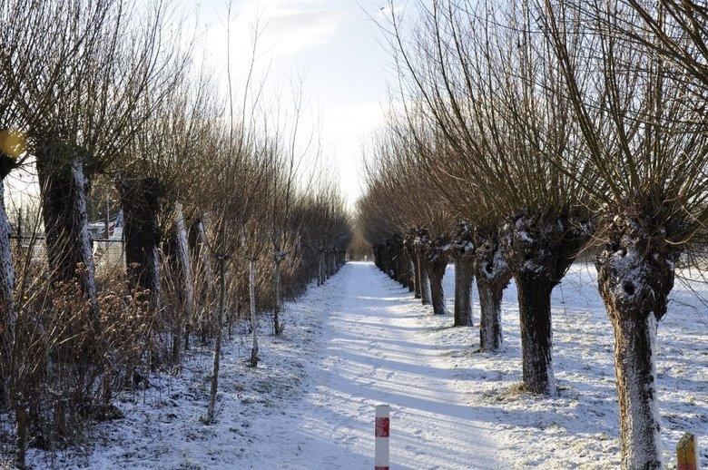 Winter in Barendrecht - Carnisse grienden in Barendrecht
