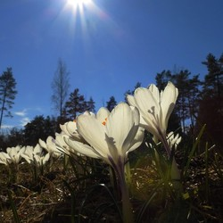 bij ons ook voorjaar