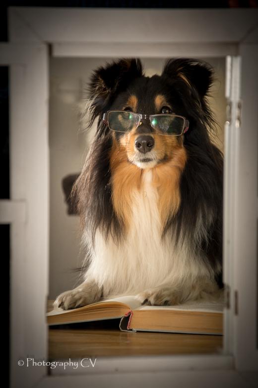 """Gytah - Zelfs voor de dieren word de stay at home tijd te lang... Ze zijn de boeken in gedoken <img  src=""""/images/smileys/yawn.png""""/>"""