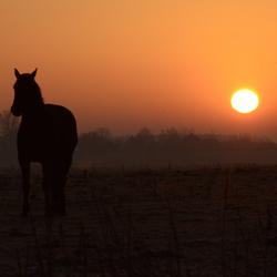 Horselight
