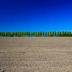 Bomenrij in Den Ham (Gr.)