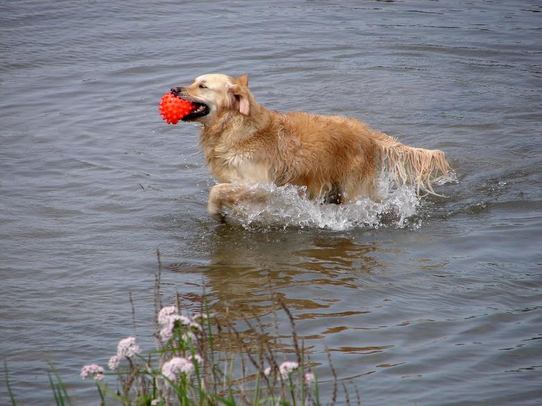 golden - De foto is van het voorjaar gemaakt. Heerlijk zwemmen!
