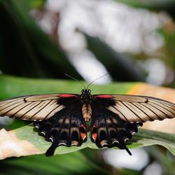 Vlinders in m'n buik