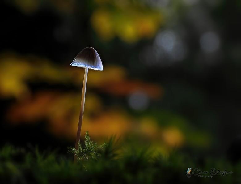 Alone in the Dark -