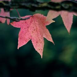 Bijna herfst