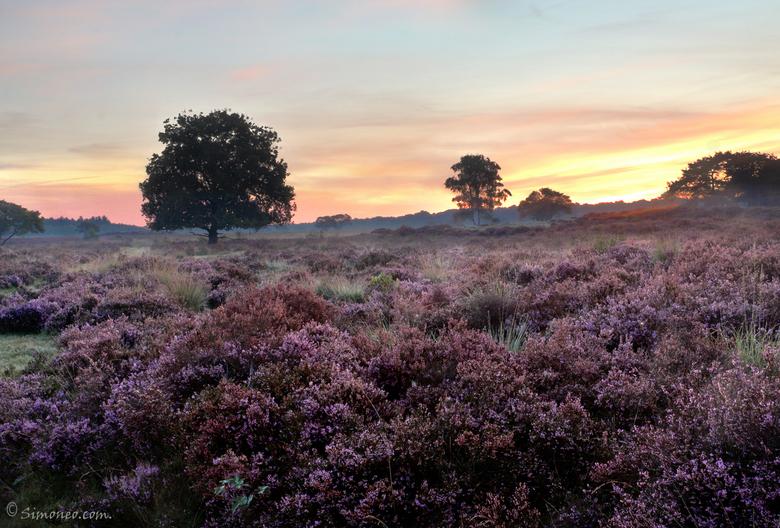 Zuiderheide Hilversum bij zonsopgang - Zonsopgang op de hei stond al een tijdje op mijn lijstje. Vanochtend eindelijk in alle vroegte (05.45) vertrokk
