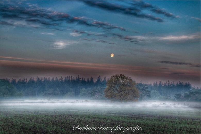 Nog vóór zonsopkomst -