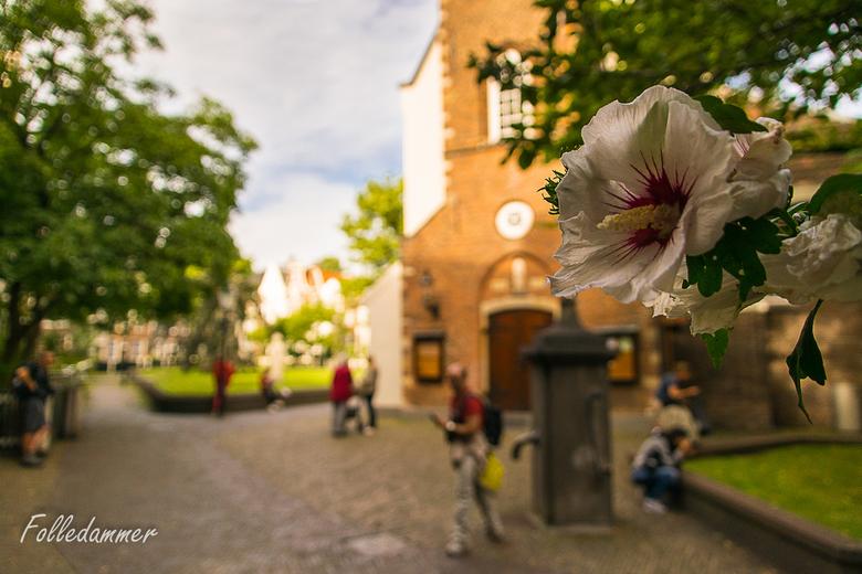 Begijnhof, Amsterdam - Een foto van het Begijnhof in Amsterdam, maar dan net even anders. Ik zag de bloemen aan een struik hangen en dacht die mooi te