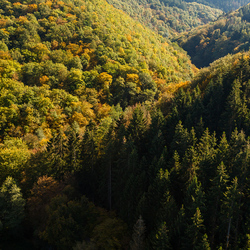 Een bosje bomen