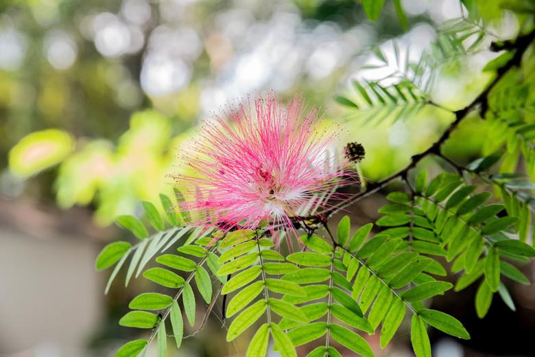 Pink - Pink garden